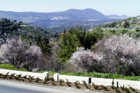 Spring in the Galilee